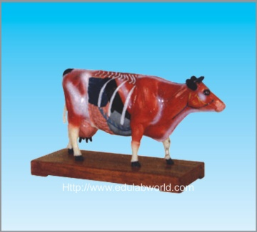 Cattle acupuncture model